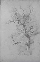 Jean Achille Benouville, Uno studio di albero | Une étude d'arbre
