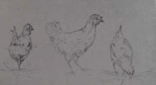 Odoardo Borrani, Studio di tre galline