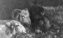 Stefano Bruzzi, Due pecore e un asino