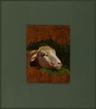 Stefano Bruzzi, Testa di pecora