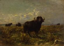 Enrico Coleman, Bufali nella campagna romana