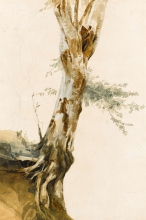 Costa, Studio di albero.jpg