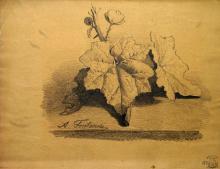 Fontanesi, Foglie di edera e ramo fiorito
