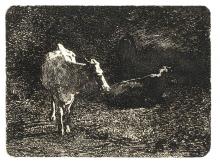 Fontanesi, Mucche