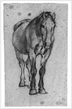 Gioli Luigi, Cavallo [3].png