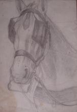 Gioli Luigi, Testa di cavallo.jpg