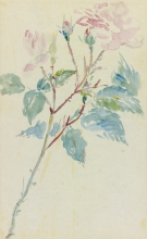 Manet, Rose canine.jpg
