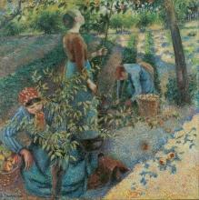 Pissarro Camille, La raccolta delle mele [1886].jpg