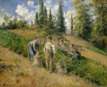 Pissarro Camille, La raccolta, Pontoise.jpg