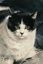 Zorn, Il gatto Calle | Calle katt | Calle the cat