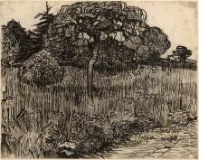 van Gogh, Albero piangente | Arbre pleurant | Weeping tree