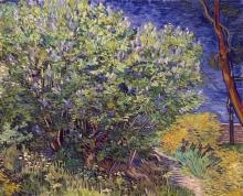 van Gogh, Cespuglio di lillà   Buisson de lilas   Lilac bush