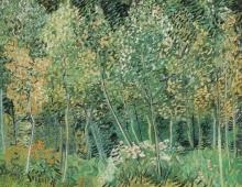 van Gogh, Sottobosco   Sous-bois   Undergrowth