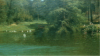 Achille Formis, Taxodium distichum, 1881, Collezione privata