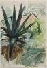 Zorn, Studio di foglie per Ninfa dell'amore   Bladstudie till Kärleksnymf   Study of leaves for Love nymph